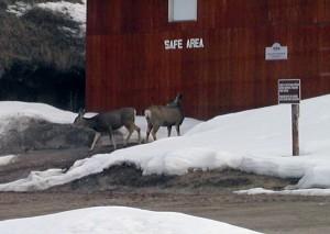 Jackson Hole Gun Club Wildlife